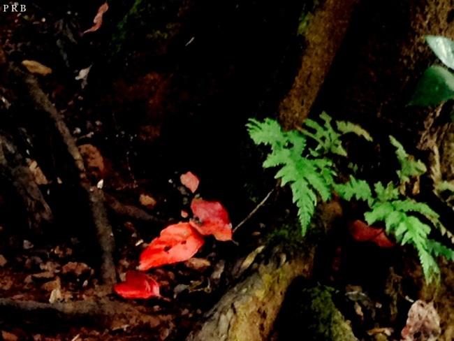 Lovely fall leaves near the Lingmala Waterfall, Mahabaleshwar